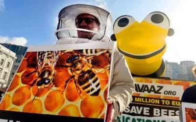 AVAAZ – rettet die Bienen